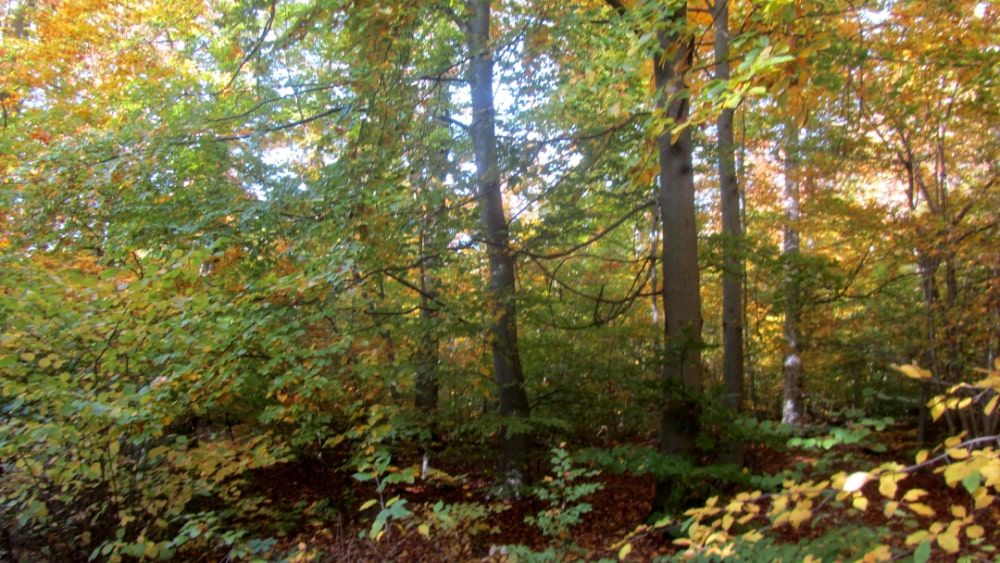 Wald rund um Leonberg