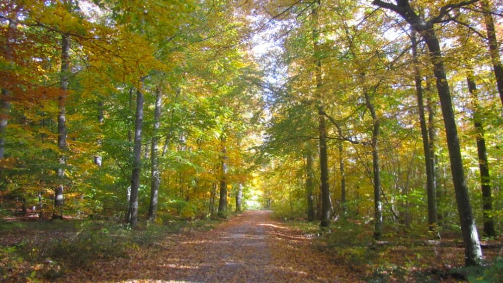 Wald in Leonberg