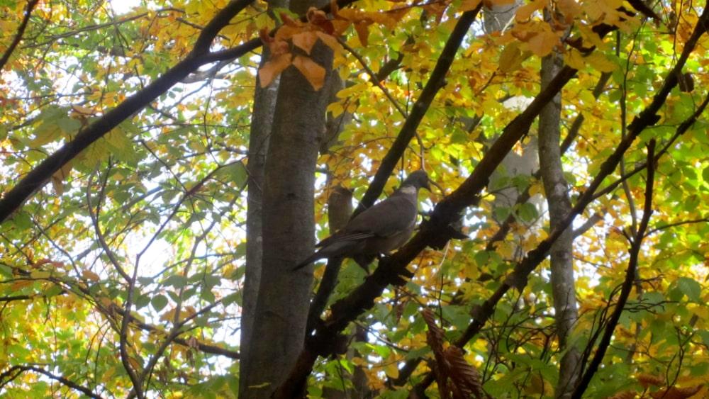 Eine Taube im Baum