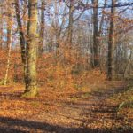 Wald in Leonberg