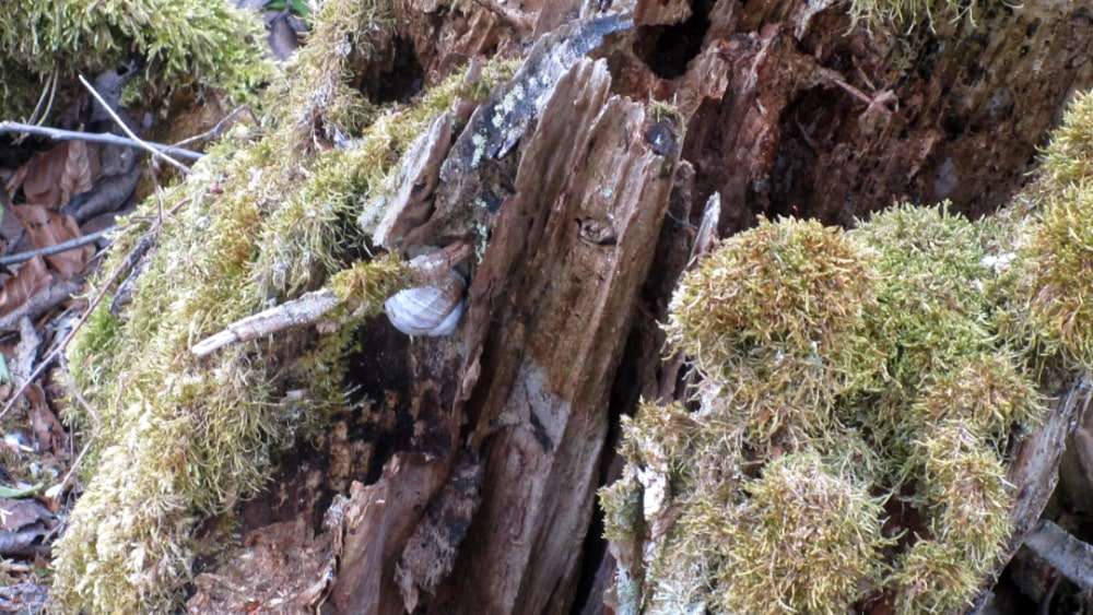 Waldimpression