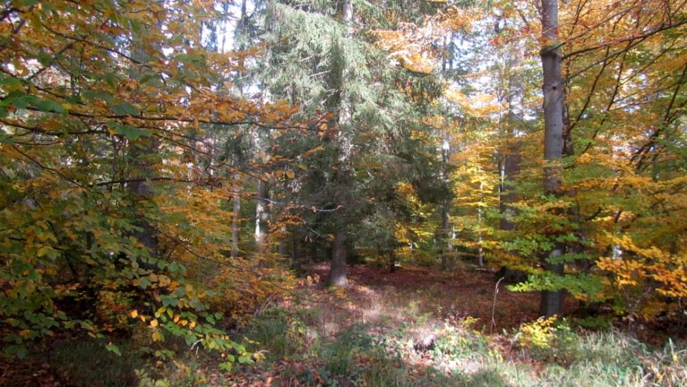 Wald um den Rappenhof